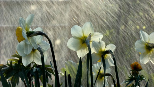 wwe-naturenature-nature-flowers-in-rain-355557